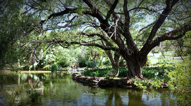 Jan Cilliers Park - Picnic Spots - Groenkloof
