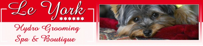 Le York Hydro Grooming Spa & Boutique - header