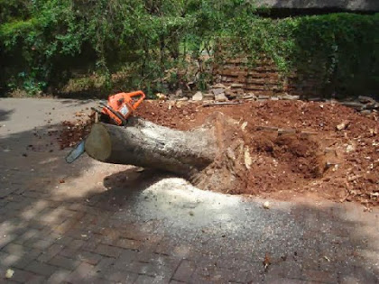 Tree Removals - Gauteng - Muzocfellers and Gardening